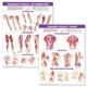 Trigger Point Chart Set: Torso and Extremities