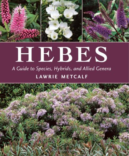 Hebes: A Guide to Species, Hybrids and Allied Genera - Lawrie Metcalf