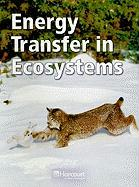 Energy Transfer in Ecosystems, Below Level Grade 4