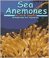 Sea Anemones - Lola M. Schaefer