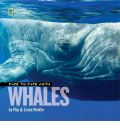 Face to Face with Whales - Flip Nicklin