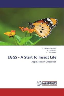 EGGS - A Start to Insect Life