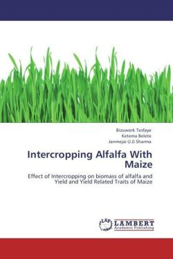 Intercropping Alfalfa With Maize - Tesfaye, Bizuwork / Belete, Ketema / Sharma, Janmejai (J. J)