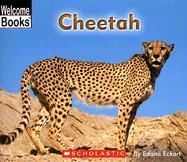Cheetah - Eckart, Edana