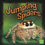 Jumping Spiders - Mattern, Joanne