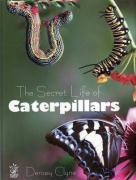 The Secret Life of Caterpillars - Clyne, Densey