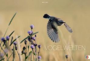 Vogelwelten 2012