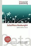 Schefflera Roxburghii