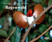 Regenwald 2007